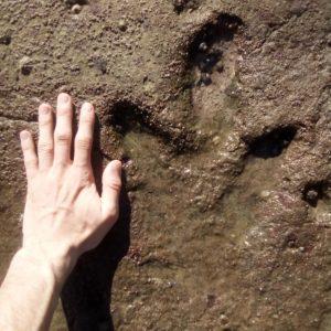 Des traces des dinosaures en 2019