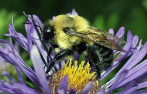 ÉCOLE À LA UNE : Jeanne d'Arc à Pont de Beauvoisin – les insectes pollinisateurs