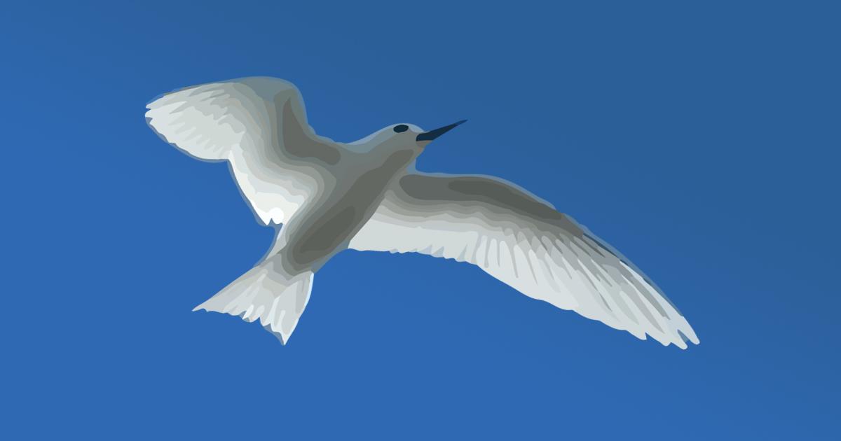 Itata'e l'oiseau blanc de Tahiti