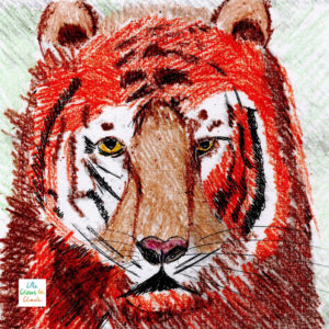 Le tigre de Java