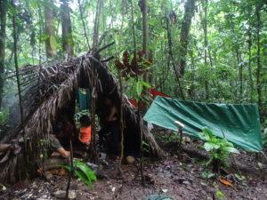 Retour aux sources dans la forêt primaire