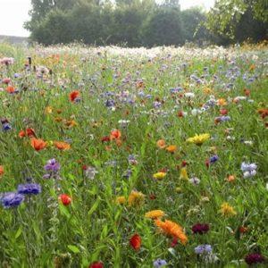 Nature or biodiversity?