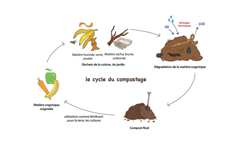Le cycle du compostage