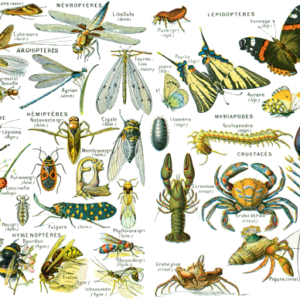 La classification des arthropodes