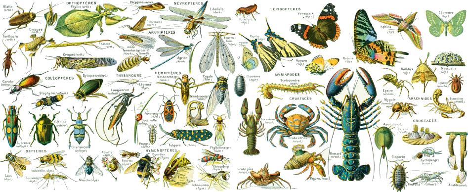 La classification des arthropodes
