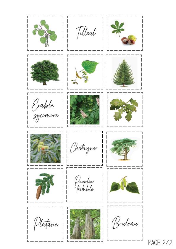 Planche 2 du loto des arbres