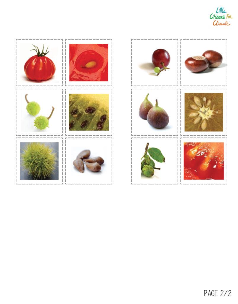Loto des fruits