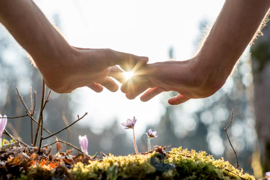 Mains qui se touchent au-dessus d'une fleur