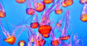 Article encyclopédie de l'environnement sur les milieux marins