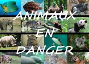 d__dicace_aux_animaux_1