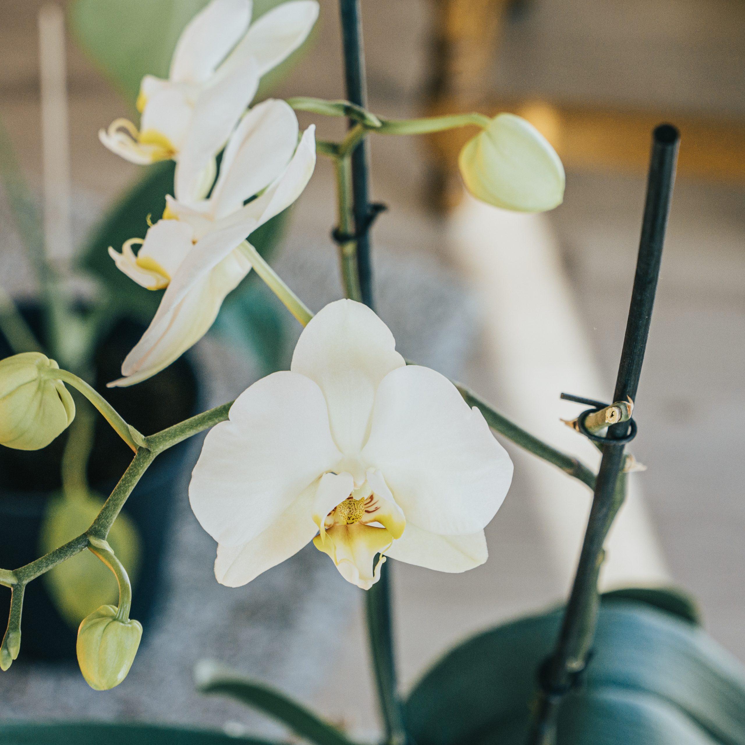 La vie amoureuse des orchidées