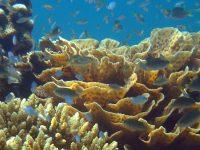 coraux_couv-corail-ocean